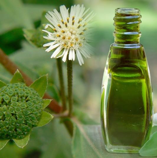 bhringraj oil properties and benefits